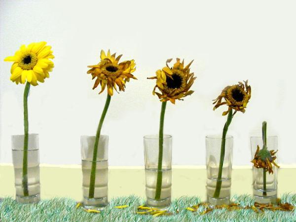 5 Cara Menghidupkan Kembali Bunga Yang Layu Womantalk