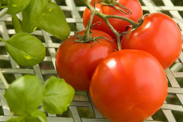 5 Makanan Kaya Zat Besi Untuk Anemia Womantalk