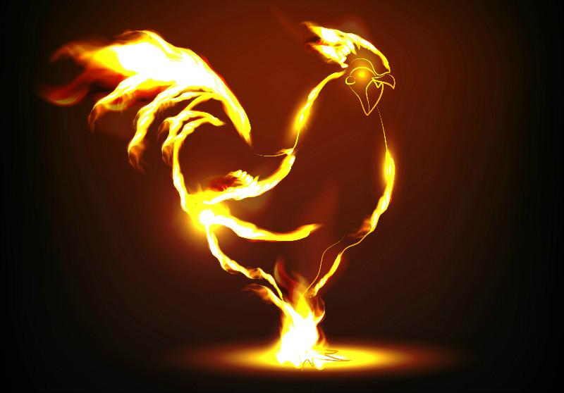 400+ Gambar Animasi Ayam Keren  Paling Keren